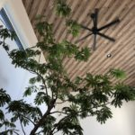 【室内】大型観葉植物をリビングに置いて6カ月が経過したのでメリット・デメリットをまとめてみる【エバーフレッシュ】